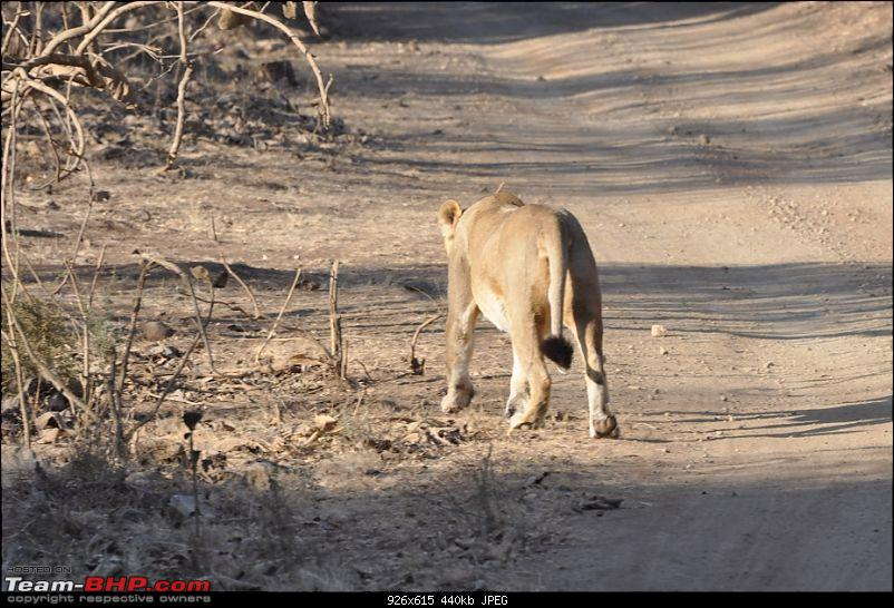 �Sasan Gir� � The Last Home to Asiatic Lion-girnp-221.jpg