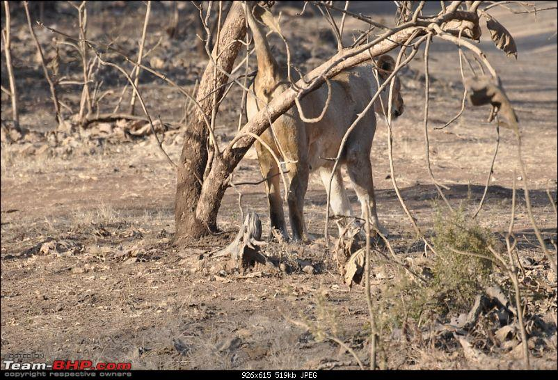 �Sasan Gir� � The Last Home to Asiatic Lion-girnp-225.jpg