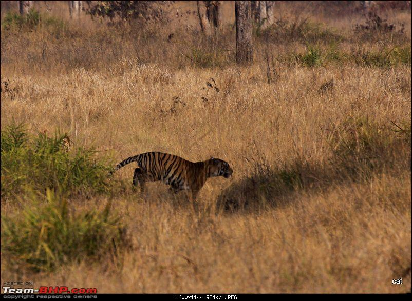 """Reflections on Wildlife Addictions """"Pench and Kanha National Park""""-img_1191.jpg"""