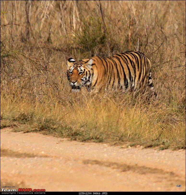 """Reflections on Wildlife Addictions """"Pench and Kanha National Park""""-img_1197.jpg"""