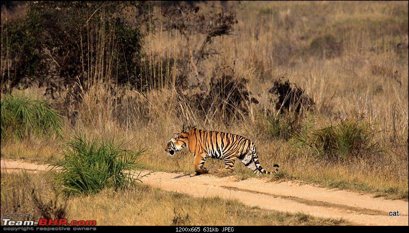 """Reflections on Wildlife Addictions """"Pench and Kanha National Park""""-img_1210.jpg"""