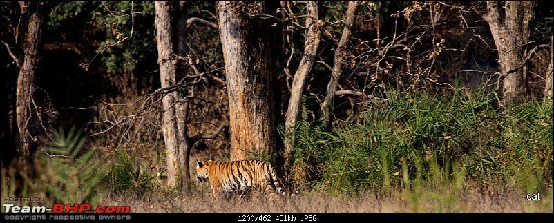 """Reflections on Wildlife Addictions """"Pench and Kanha National Park""""-img_1224.jpg"""