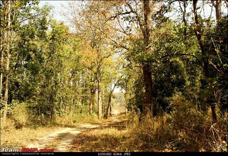 """Reflections on Wildlife Addictions """"Pench and Kanha National Park""""-122.jpg"""