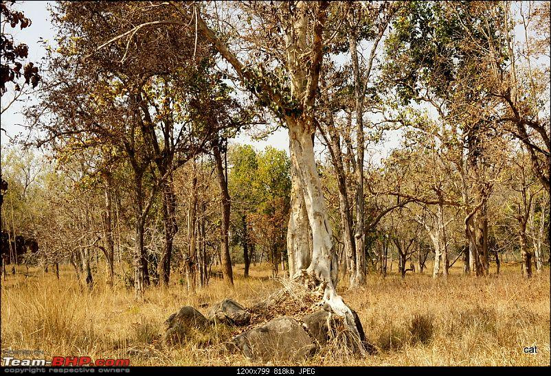 """Reflections on Wildlife Addictions """"Pench and Kanha National Park""""-133.jpg"""
