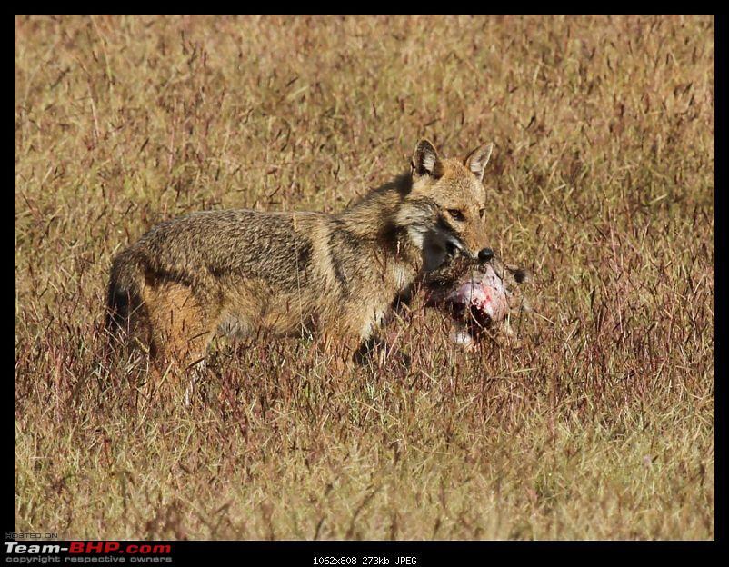 Trailing the Big Cat at Bandhavgarh-015-1024x768.jpg