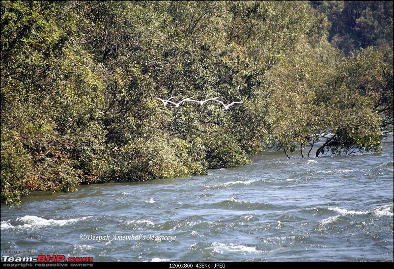 Kolad for adventure and rejuvenation-birdsandwater-desktop-resolution.jpg