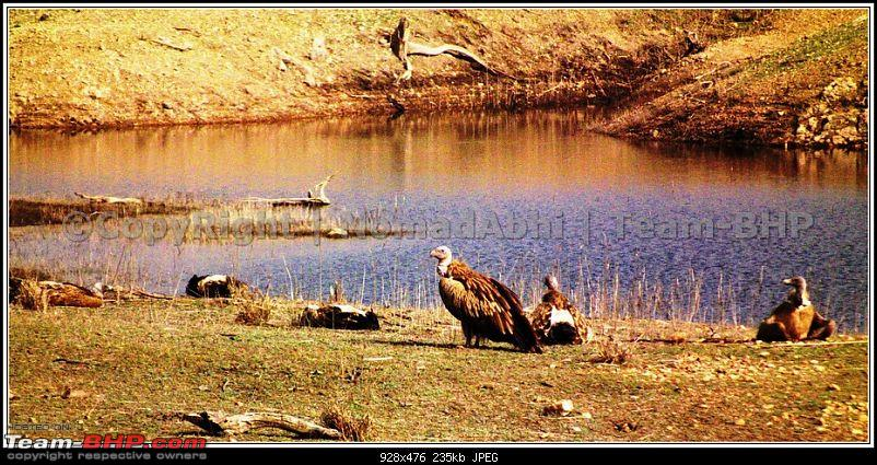 For how long we will be able to see Pench...?-23vulture-family.jpg