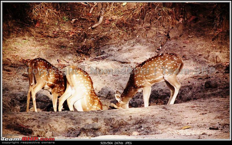 For how long we will be able to see Pench...?-27saltreapers.jpg