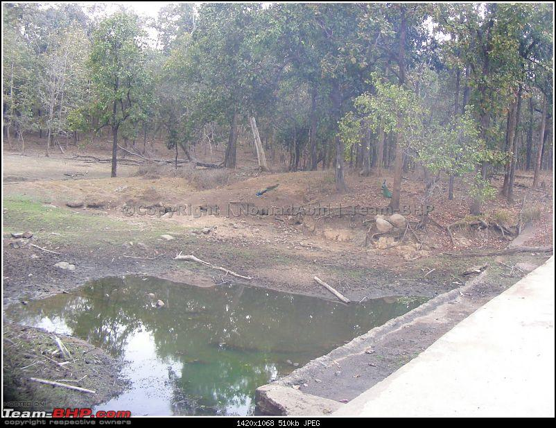 For how long we will be able to see Pench...?-waterscarecity.jpg