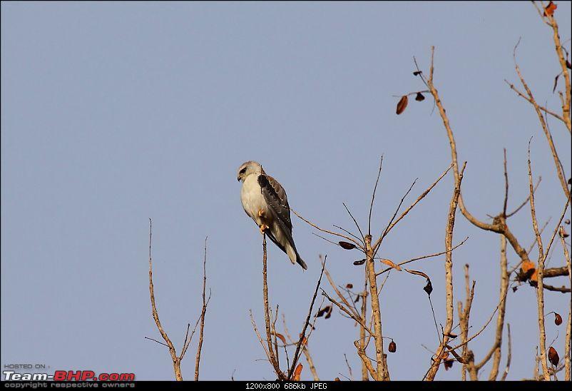 A Week-long Wildlife Adventure - Kanha & Bandhavgarh-img_1162.jpg