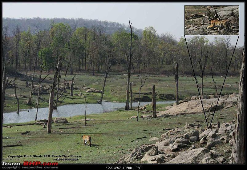 Pench Tiger Reserve - New season starts with a Bang !!!-habitat-cub.jpg