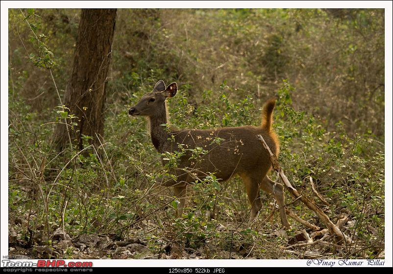 Life in Jungles of Kabini - April 2011-20110419-life-jungles-kabini_0353.jpg