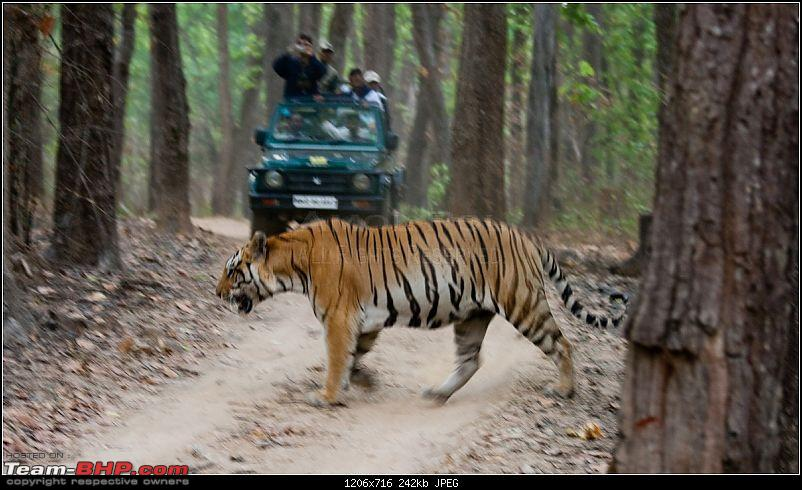 Two Men & A Baby - In Search Of The Stripes-mp-tiger-hunt-111.jpg