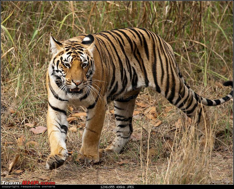 Two Men & A Baby - In Search Of The Stripes-mp-tiger-hunt-114.jpg