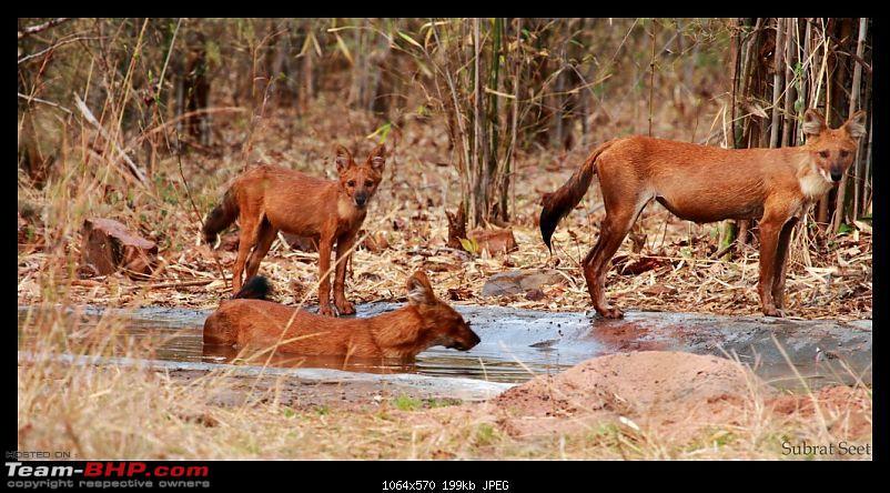 Tadoba Andhari Tiger Reserve - Rocking-tadoba-day-2-mor22-1024x768.jpg