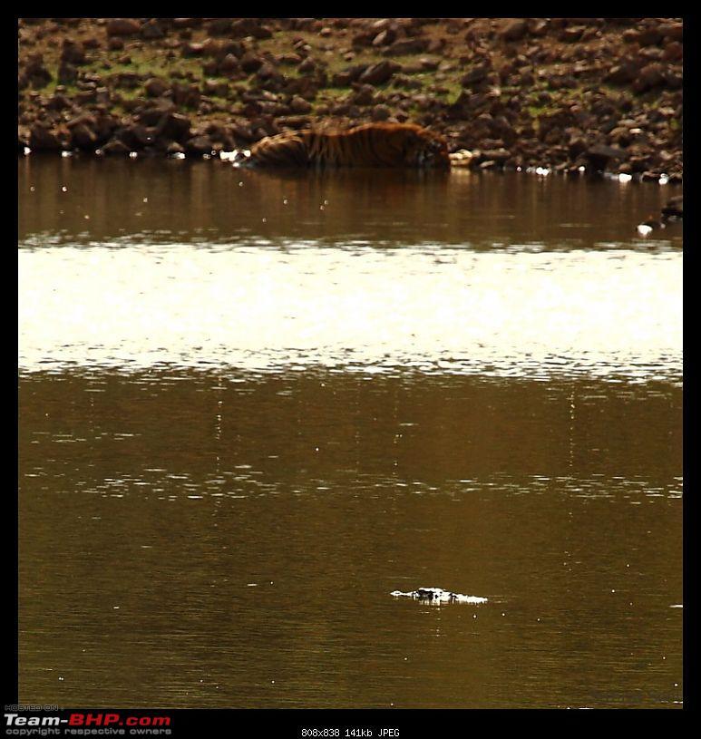 Tadoba Andhari Tiger Reserve - Rocking-tadoba-day-121-1024x768.jpg
