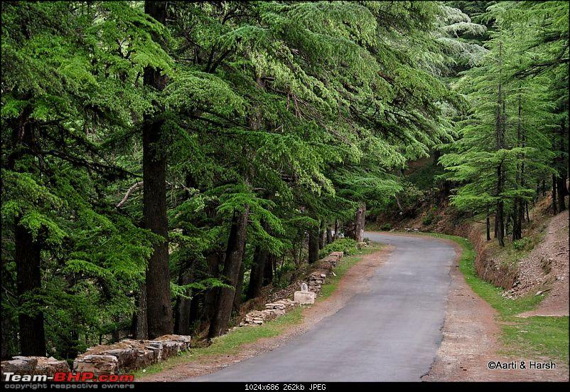 A drive to Pabbar valley & Chanshal: Spring break 2011-dsc_49831.jpg