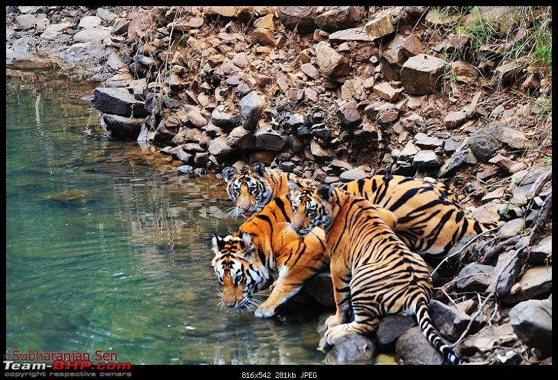 Gurgaon - Jhansi - Khajuraho - Bandhavgarh - Pench - Kanha - Bhedaghat - Gurgaon-17788740374d07670639c99.jpg