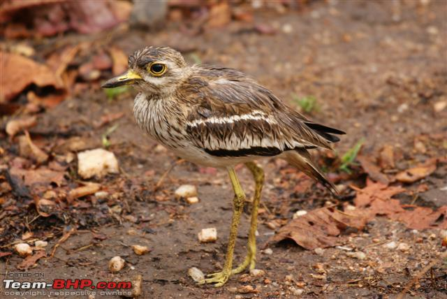 Name:  Thick Knee 2 Small.JPG Views: 905 Size:  58.0 KB