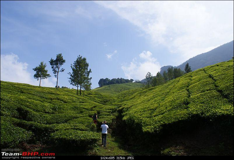 Bangalore Munnar Kodaikanal Valparai - 10 days of bliss-o.jpg