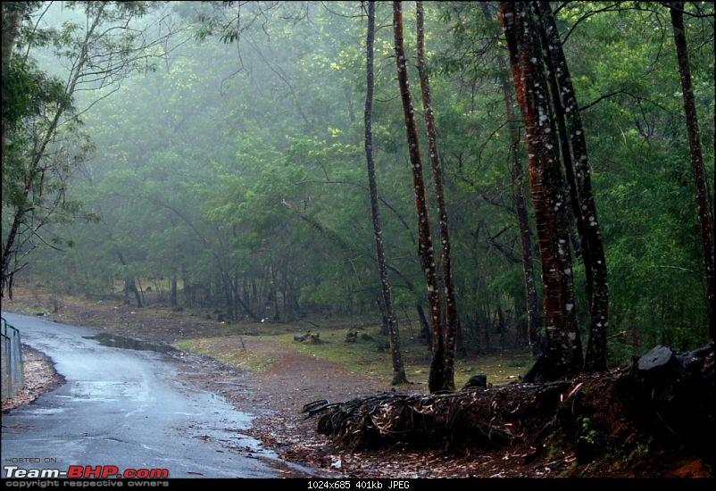 Bangalore Munnar Kodaikanal Valparai - 10 days of bliss-zb.jpg