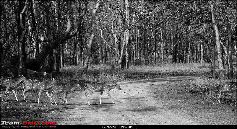 Gurgaon - Jhansi - Khajuraho - Bandhavgarh - Pench - Kanha - Bhedaghat - Gurgaon-4553.jpg