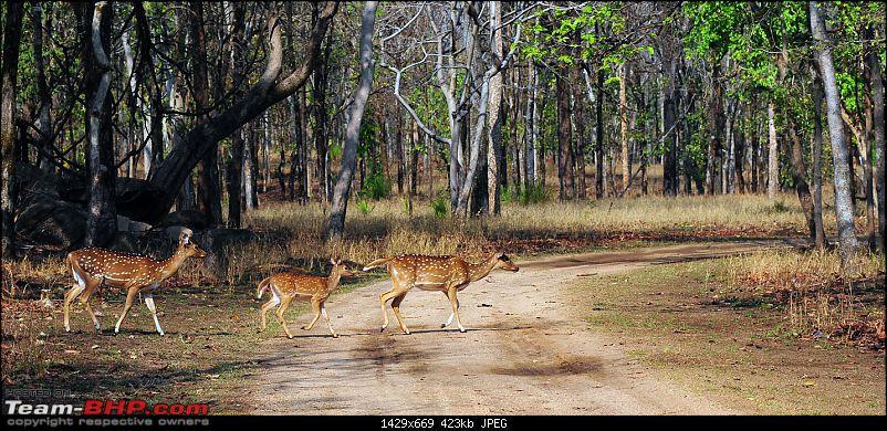 Gurgaon - Jhansi - Khajuraho - Bandhavgarh - Pench - Kanha - Bhedaghat - Gurgaon-4562.jpg