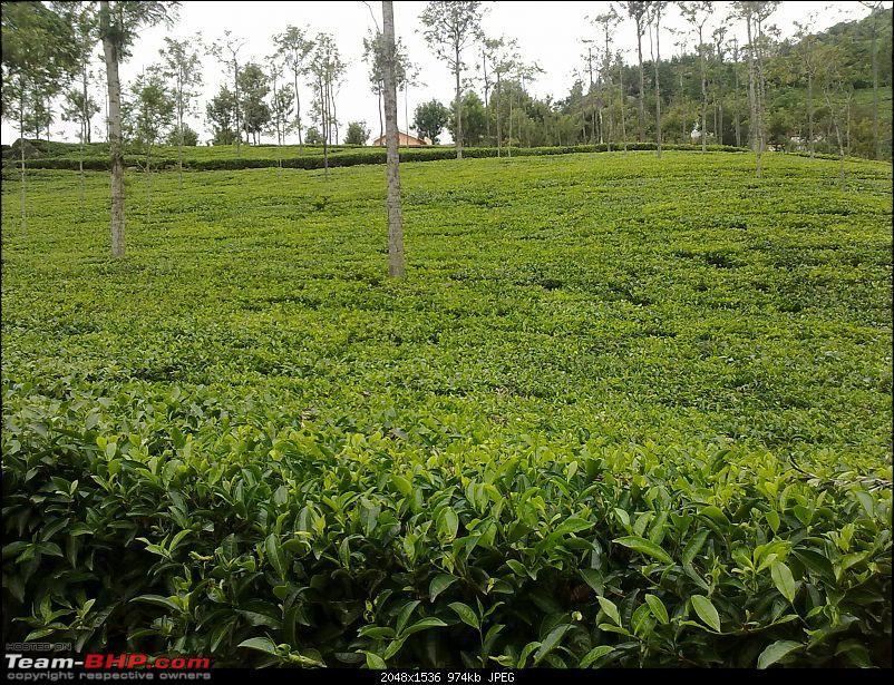 Blore -> Ooty, Bandipur, Mudumalai and Coonoor - Photologue-22082010229.jpg