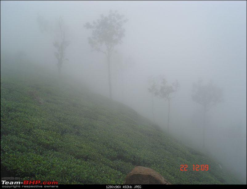 Blore -> Ooty, Bandipur, Mudumalai and Coonoor - Photologue-tea-gardens-foggy.jpg