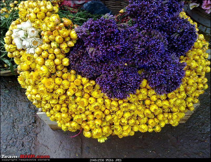 Blore -> Ooty, Bandipur, Mudumalai and Coonoor - Photologue-flowers.jpg