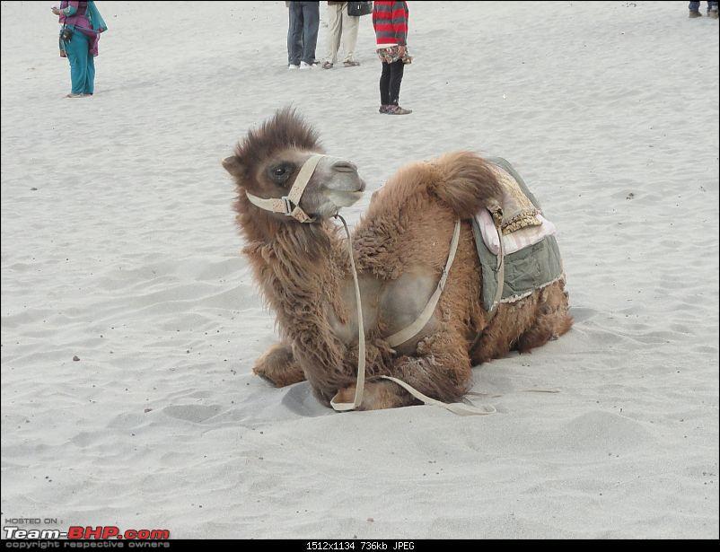 Last-minute Ladakh: My early summer travelogue-dsc02926.jpg