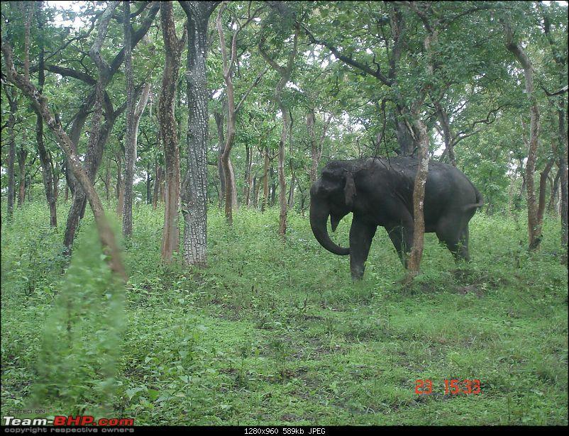 Blore -> Ooty, Bandipur, Mudumalai and Coonoor - Photologue-elephant-mudumalai.jpg