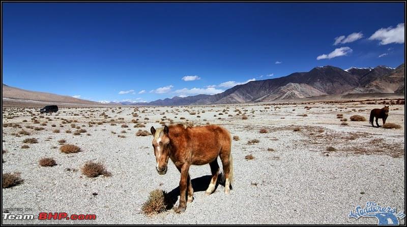 Name:  Ladakh Changthang121.jpg Views: 11943 Size:  132.8 KB