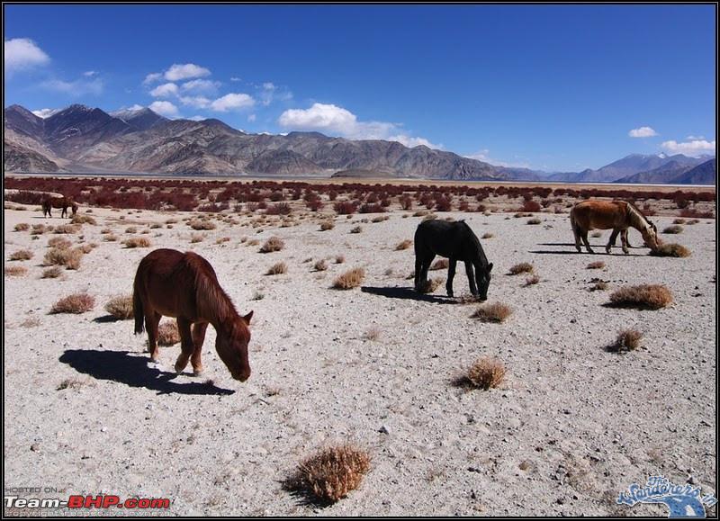 Name:  Ladakh Changthang18.jpg Views: 15641 Size:  179.2 KB