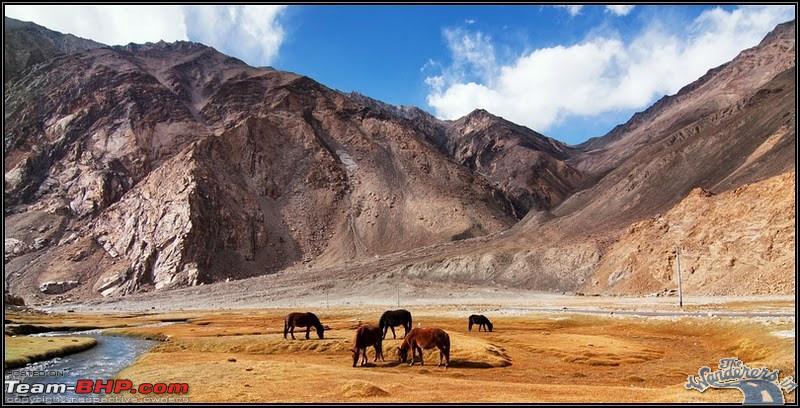 Name:  Ladakh Changthang106.jpg Views: 4509 Size:  140.8 KB