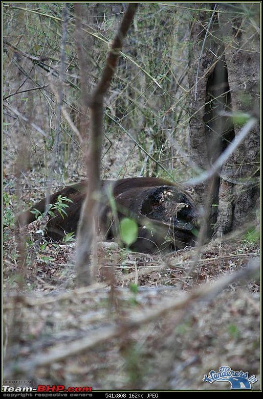 Forests of Vidarbha - 2010 Scorching Summer Wildlife Travel-> Nagzira-Melghat-Tadoba-img_9412.jpg