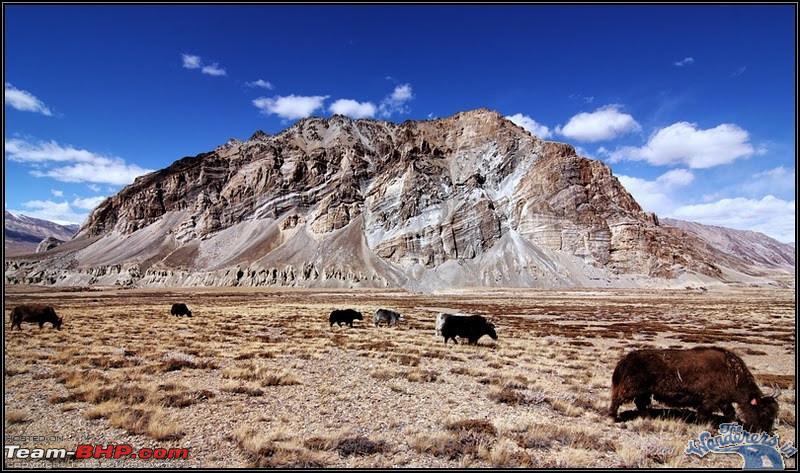 Name:  Ladakh Changthang25.jpg Views: 2242 Size:  161.9 KB