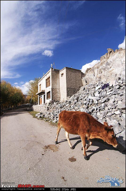 """Self-Drive Expedition Travel-Ladakh and cold desert Changthang in """"off-season"""" Oct 10-img_3815.jpg"""