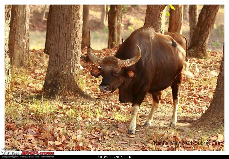 Adventure in Kipling Country - Kanha National Park-kanha-may-201105-1024x768.jpg
