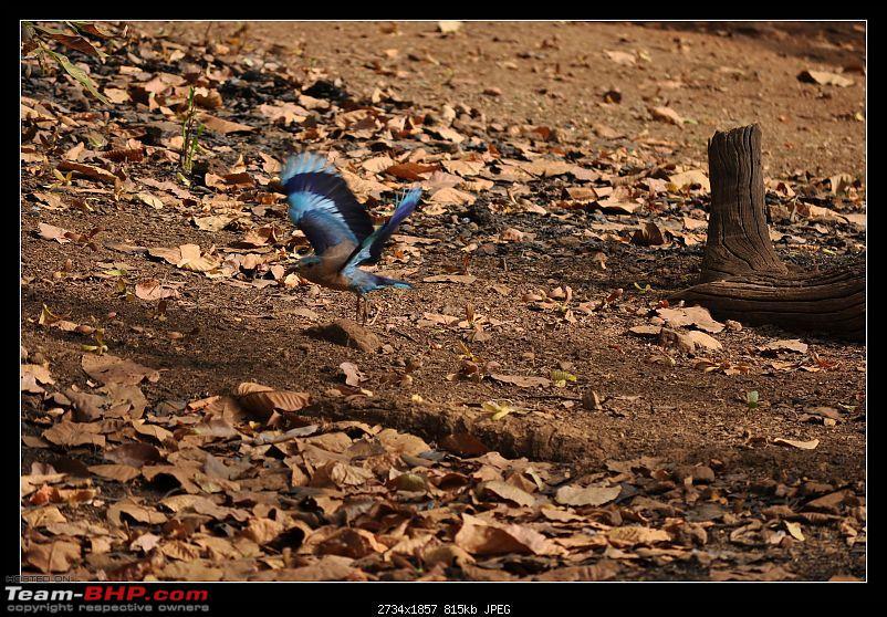 A Nikon D5000 in the land of the tiger - Kanha National Park visit.-dsc_0261.jpg