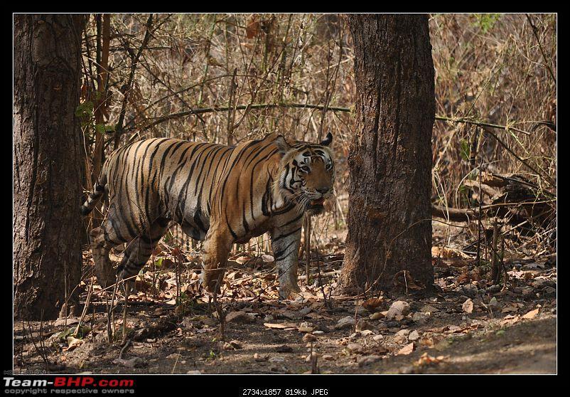 A Nikon D5000 in the land of the tiger - Kanha National Park visit.-dsc_0353.jpg