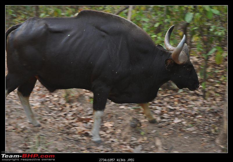 A Nikon D5000 in the land of the tiger - Kanha National Park visit.-dsc_0426.jpg