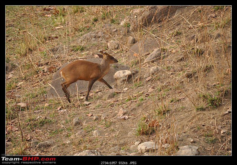 A Nikon D5000 in the land of the tiger - Kanha National Park visit.-dsc_0477.jpg