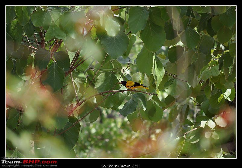 A Nikon D5000 in the land of the tiger - Kanha National Park visit.-dsc_0712.jpg
