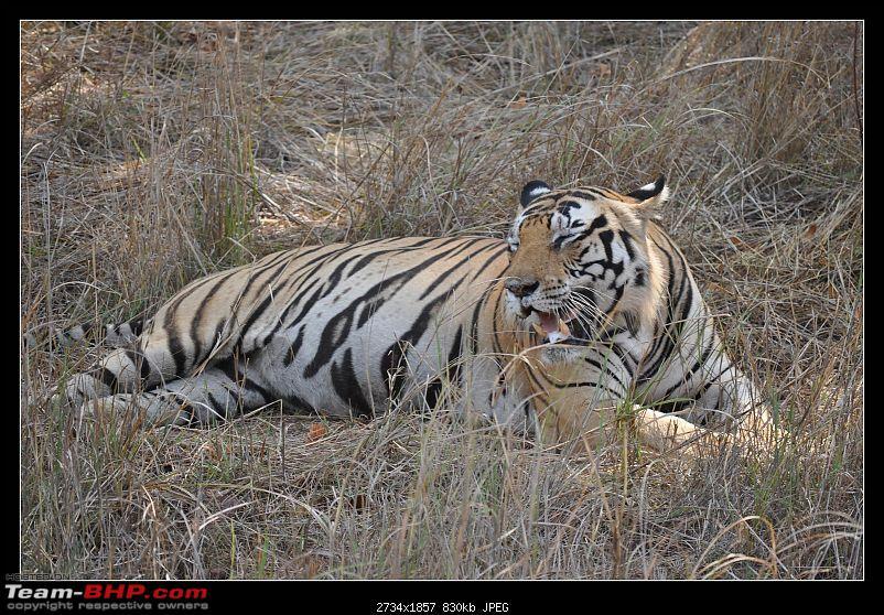 A Nikon D5000 in the land of the tiger - Kanha National Park visit.-dsc_0845.jpg