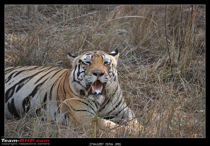 A Nikon D5000 in the land of the tiger - Kanha National Park visit.-dsc_0848.jpg