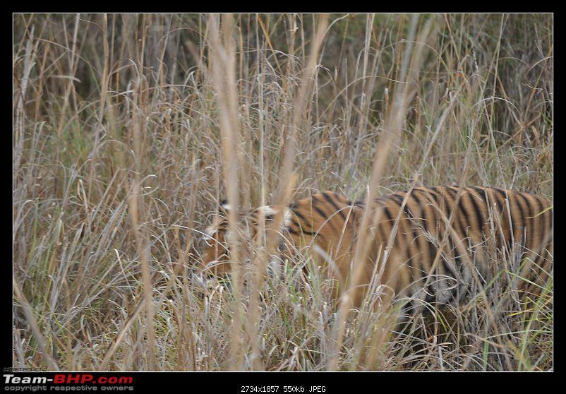 A Nikon D5000 in the land of the tiger - Kanha National Park visit.-dsc_0935.jpg