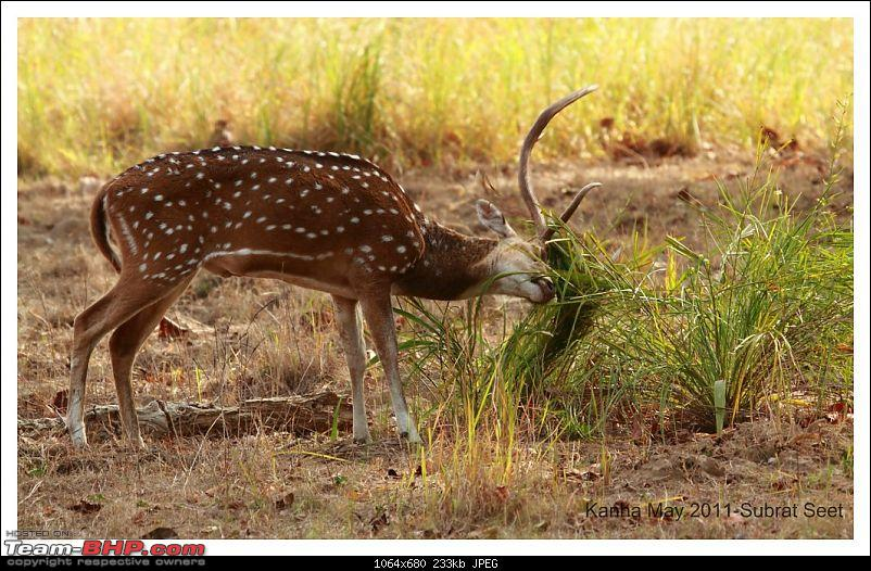 Adventure in Kipling Country - Kanha National Park-kanha-may-201117-1024x768.jpg