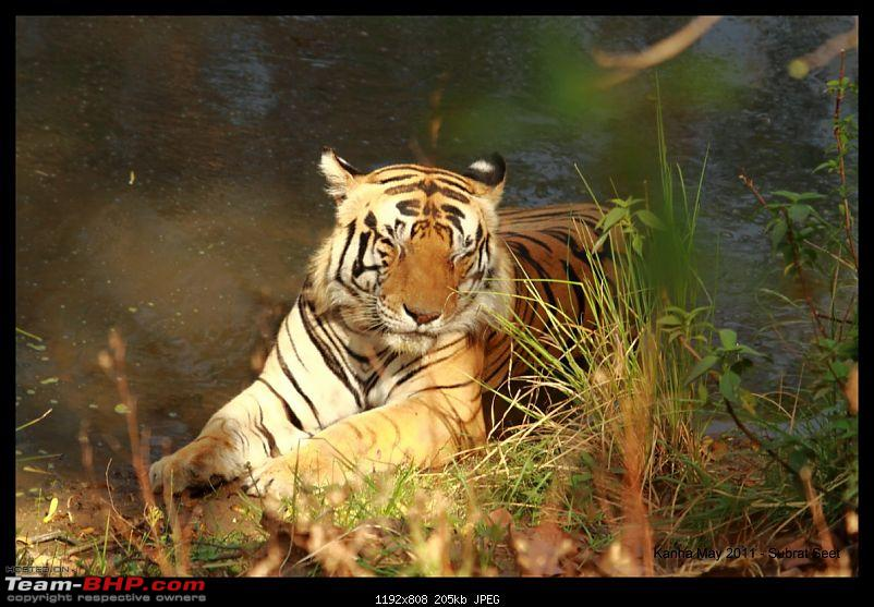 Adventure in Kipling Country - Kanha National Park-kanha-may-201138-1280x768.jpg