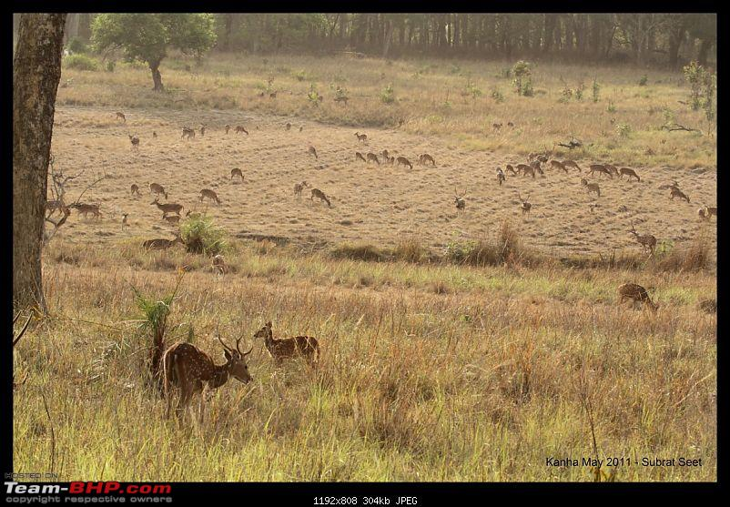 Adventure in Kipling Country - Kanha National Park-kanha-may-201129-1280x768.jpg